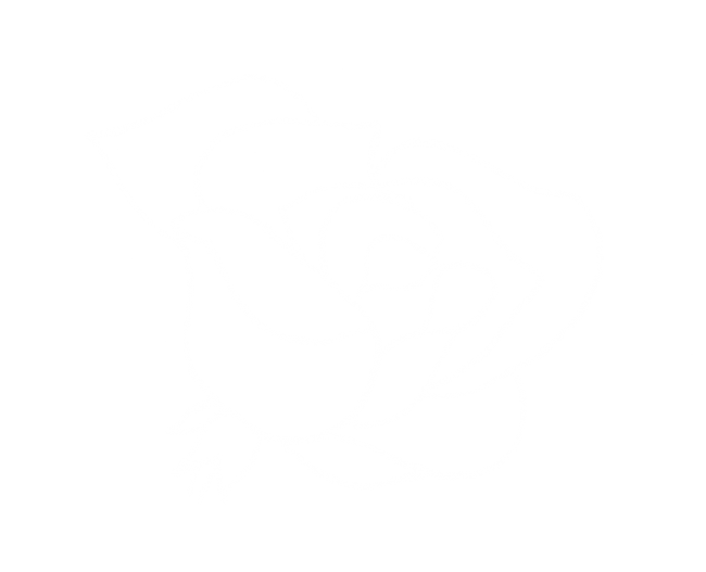 A rose by Bobby Abate